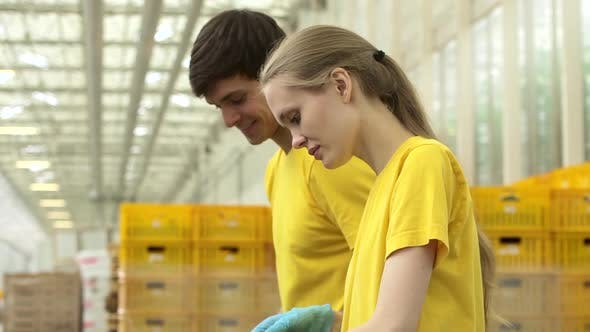 Guy und Girl Volunteers packen frisches Gemüse während des Arbeitstages in Agro Company Spbd