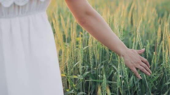 Wheat Field with Ears