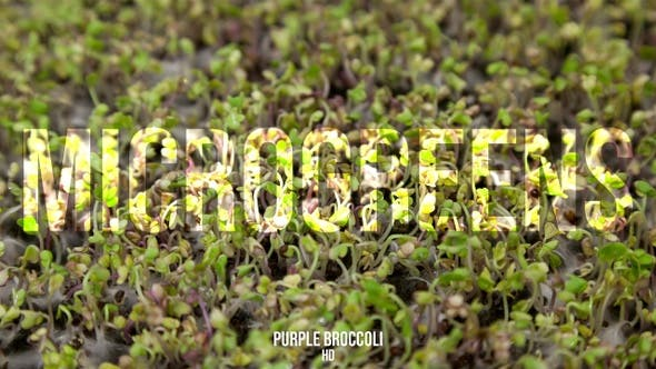 Cover Image for Microgreens Purple Broccoli 2