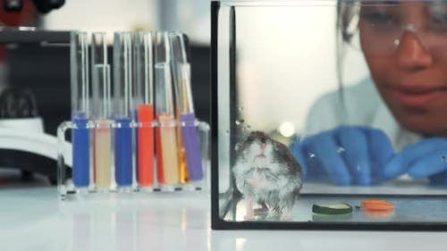 Closeup of Female Scientist Observing Hamster's Behavior During the Experiment in Modern Lab