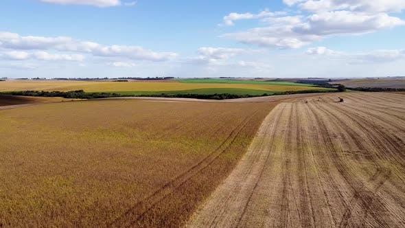 Aerial Footage of Soybean Field