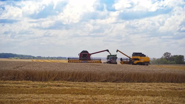 Thumbnail for Yellow grain harvesting combines in a sunny day working