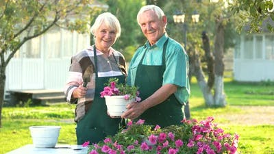 Senior Couple and Flower Pot.