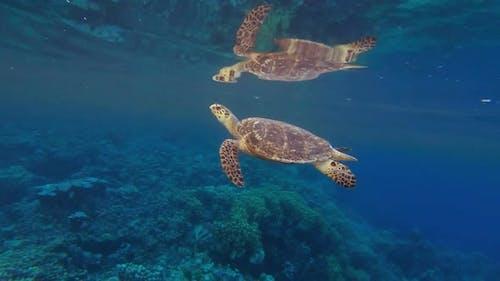 Sea Turtle Breath Reflection