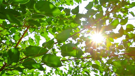 Thumbnail for Sunlight Through The Leaves 7