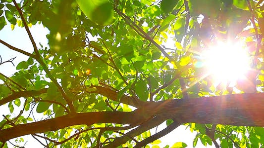 Thumbnail for Sunlight Through The Leaves 8