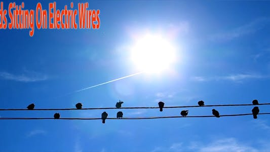 Thumbnail for Birds Sitting On Electric Wires