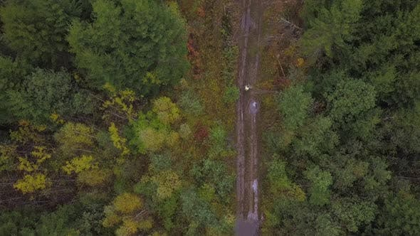 Thumbnail for Autumn Forest Road and Forestman Aerial View