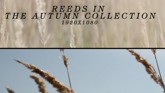 Thumbnail for Reeds In The Autumn ( 2 in 1 )