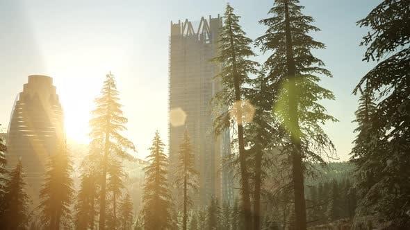 Thumbnail for Park Forest and Skyscrapes at Sunset
