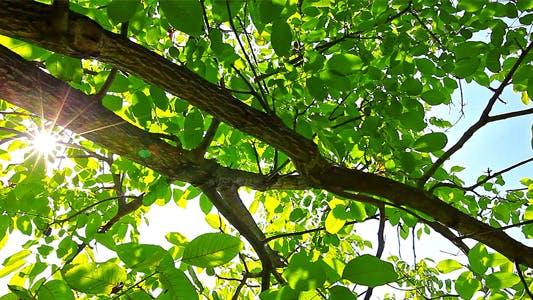 Thumbnail for Sunlight Through The Leaves 10