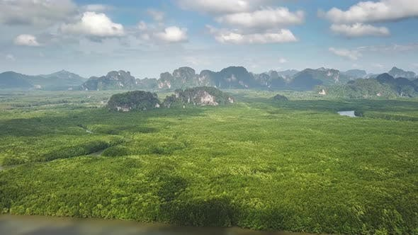 Cover Image for Aerial View on Mangrove Forest and River Thailand