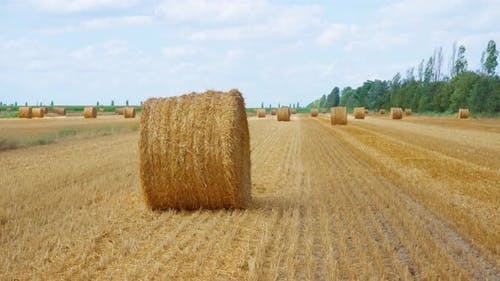 Yellow Hay Field with Haystack