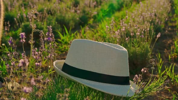 Thumbnail for b Roll Male Caucasian Traveler and Bush Lavender