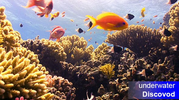 Thumbnail for Colorful Fish on Vibrant Coral Reef 62