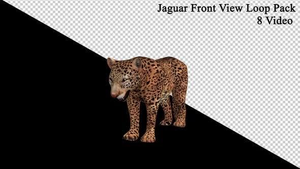 Jaguar Front View Loop Pack