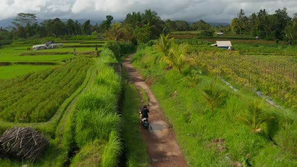 Man on Motorcycle Driving Through Rural Tropical Countryside with Rice Fields and Palm Trees in Bali
