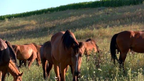 Horses Eat Grass.