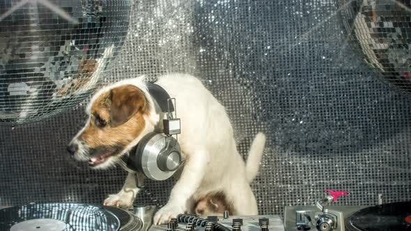 Thumbnail for Dog Dj
