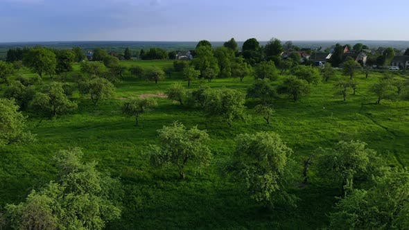 Thumbnail for Beautiful Top View of Green Forest and Grass with Path