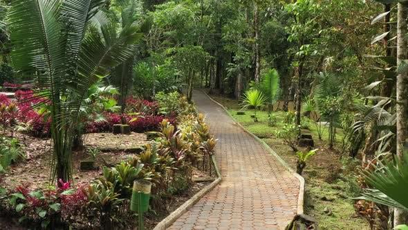 Thumbnail for Slowly following a paved pedestrian path that runs through a tropical garden alongside a small river