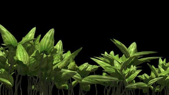 Thumbnail for Herbal Plants