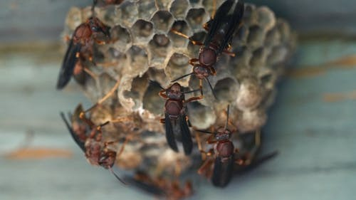 Wasp Nest Macro Close Up
