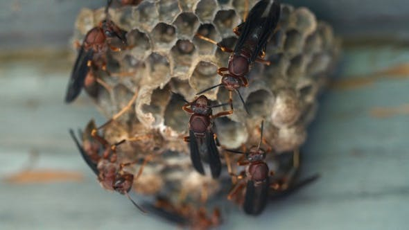 Thumbnail for Wasp Nest Macro Close Up