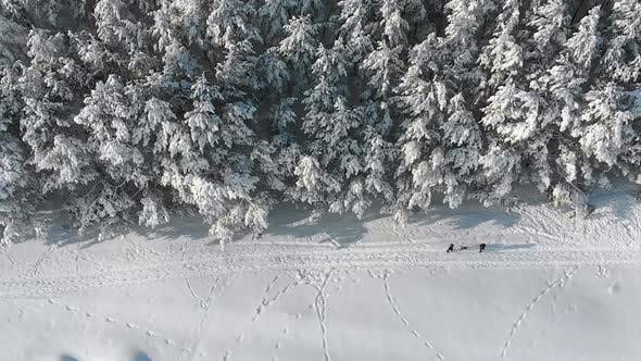 Thumbnail for Winter Pine Forest and Snowy Path with People on a Sunny Day