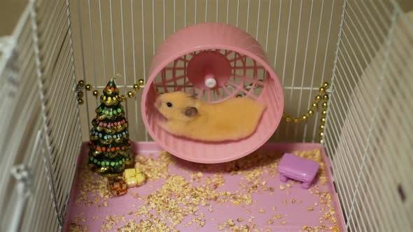 Hamster Running on Wheel Near Christmas Tree
