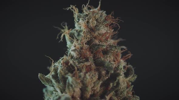 Thumbnail for Stylized Marijuana Bud Spinning Close Up