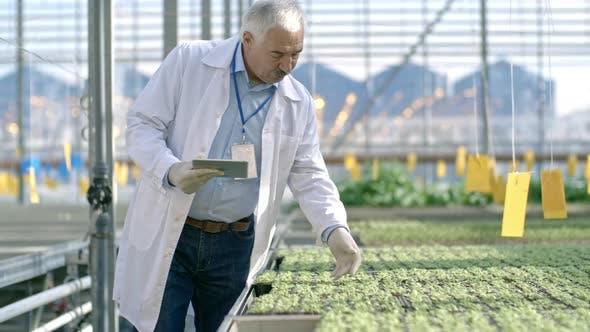 Cover Image for Senior Agronomist Inspecting Seedlings