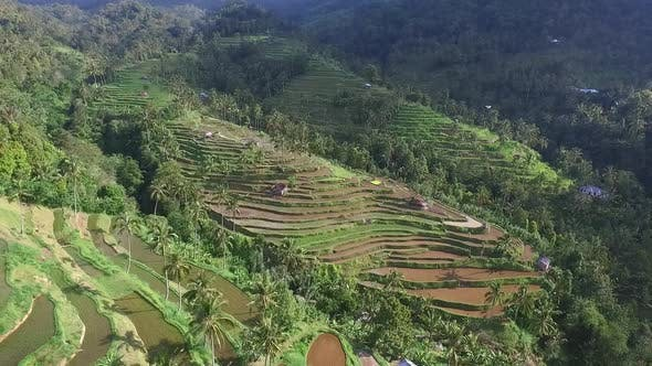 Aerial Above Rice Terraces