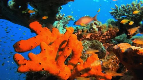 Colourful Red Sea sponge