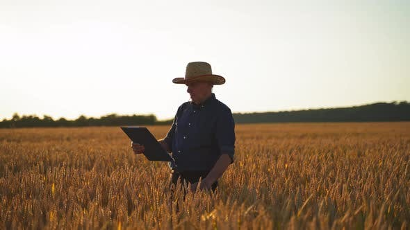 Farmer examines crop on field