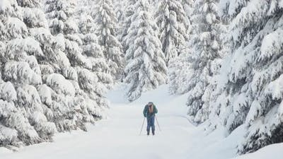 A Crosscountry Skier Skies Down a Trail in a Snowcovered Winter Landscape with Trees