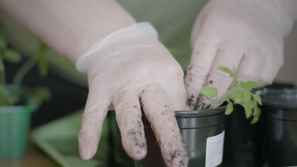 Thumbnail for Sowing Seedlings In Pots