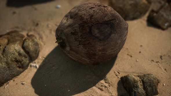 Thumbnail for Brown Coconut on the Beach Sand