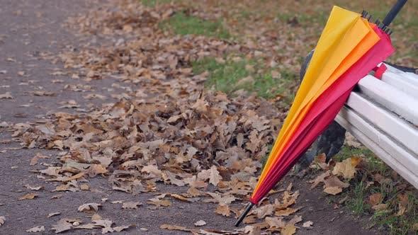 Umbrella Near Bench in Autumn Park