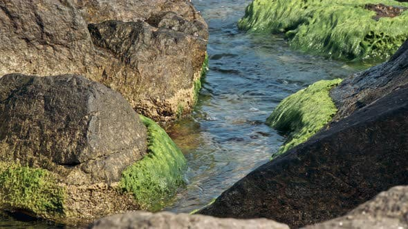 Thumbnail for Stones with Green Moss and Brown Seaweed