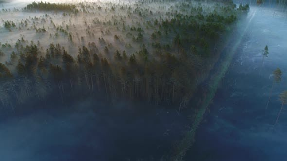 Thumbnail for Forest After Fire at Sunrise
