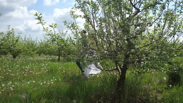 Thumbnail for Cheerful Couple Running Among Flowering Trees