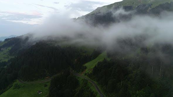 Thumbnail for Jungle In Fog