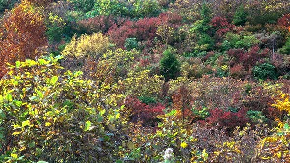 Thumbnail for Colorful Mixed Colors Scrubland and Garrigue in Autumn