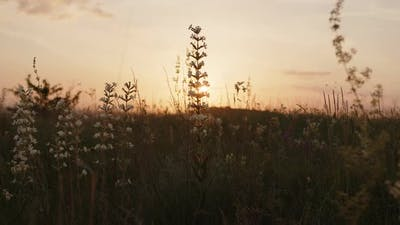 Close Up View of White Wild Flowers on the Orange Sunset