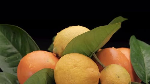 Zitrusfrucht Zitrone und Orange