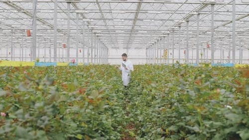 Male Agronomist Working in Glasshouse