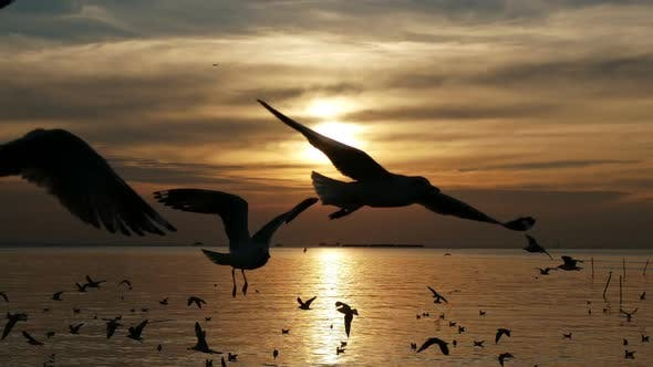 Thumbnail for Birds With Sunset