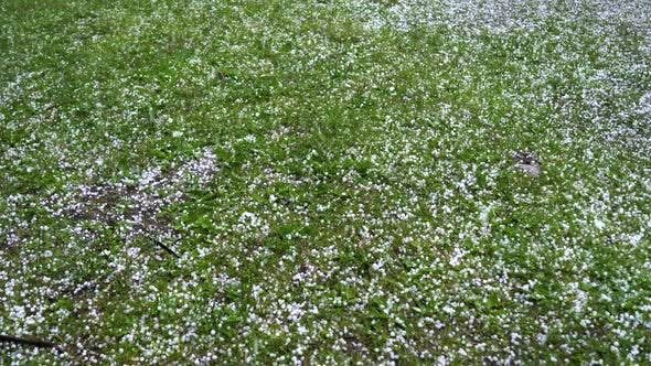 Cover Image for Large Hail Falls on the Green Grass