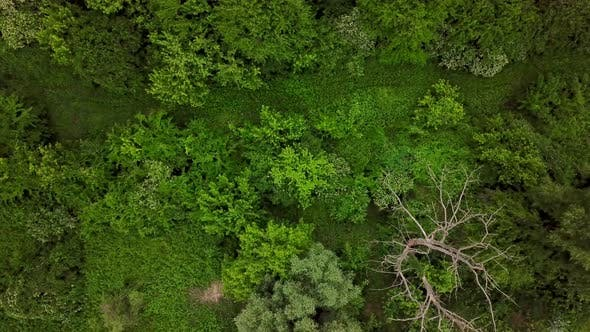 Thumbnail for Drone's Eye View  Aerial Top Down View of Woodland Mysterious Landscapes